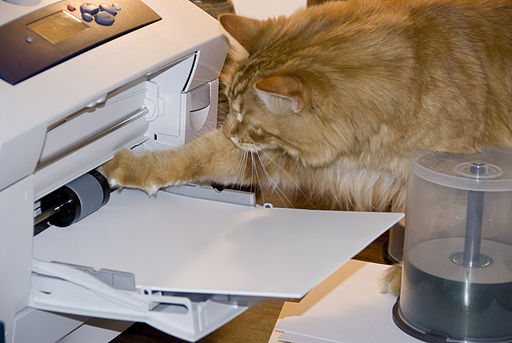 Gillie helping to jam the printer (467241015)
