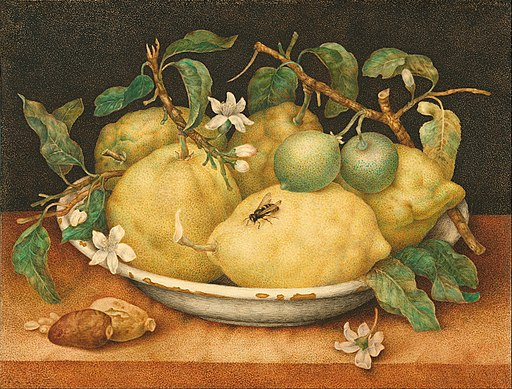 Giovanna Garzoni (Italian) - Still Life with Bowl of Citrons - Google Art Project