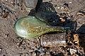 Glass bottle beach (51719).jpg