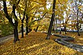 Gliwice - Park Chopina - panoramio (7).jpg