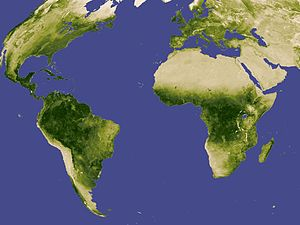 Renewable resource - Global vegetation