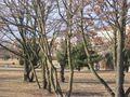 Goerlitzer Park1 Berlin.JPG