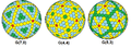Goldberg polyhedra.png