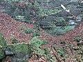 Gorge du Loup (Echternach) 09.jpg