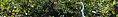 Great Swamp National Wildlife Refuge banner Egret.jpg