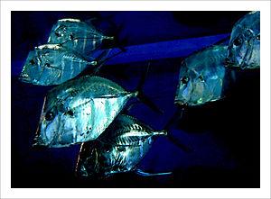 Greater Cleveland Aquarium - Image: Greater Cleveland Aquarium fish