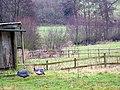 Guinea Fowl, Stalls Farm - geograph.org.uk - 1150659.jpg
