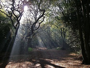 Hainault Forest - The forest path into Hainault Forest from Lambourne End, on a November morning
