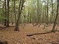 Hambach forest 20.jpg
