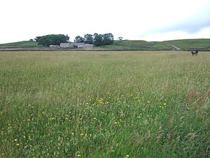 Baldersdale - Hannah's meadow, Baldersdale with High Birk Hatt farm in distance.