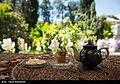 Harvest Citrus flowers in Iran 11.jpg