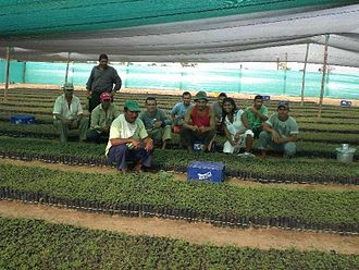 Reforestation - Tropical tree nursery at Planeta Verde Reforestación S.A.'s plantation in Vichada Department, Colombia