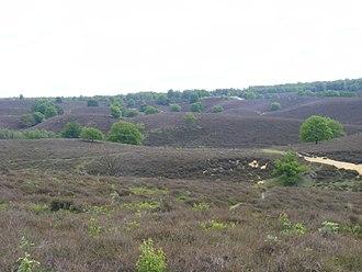 Gelderland - Veluwezoom National Park