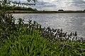 Het Laarzenpad 03 Biesbosch, Dordrecht (34575376455).jpg