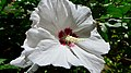 Hibiscus - Chartres Street New Orleans May 2021.jpg