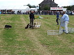 File:Highland games dog herding 1.JPG