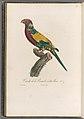 Histoire naturelle des perroquets (Pl. 27) (8181999644).jpg