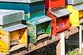 Hives (230882283).jpeg