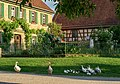 Hohenloher Freilandmuseum - Baugruppe Hohenloher Dorf - Abendspaziergang der Gänse 1.jpg