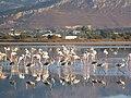 Holidays Greece - panoramio (412).jpg