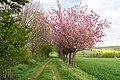 Horn-Bad Meinberg - 2015-05-04 - LSG-4118-0001 (13).jpg