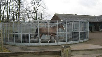 Hot walker - A horse inside an automated hot walker