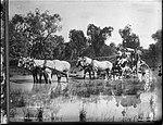 Horsedrawn mail coach crossing waterlogged ground (4903283481).jpg