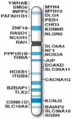 Human chromosome 17 with ASD genes from IJMS-16-06464.png