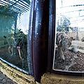 Igualdad Animal - 5151 (6992798834).jpg