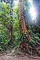 Indonesia - Bukit Lawang (25950080903).jpg