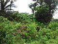 Industrial Area, Durgapur, West Bengal, India - panoramio.jpg