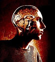 Inside my head cropped.jpg