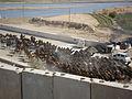 Iraq Traffic Control Camels 081127-M-8127L-002.jpg