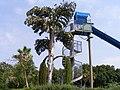 Israel;unusual tree.JPG