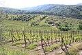 Italia 2010 Chianti vineyards.jpg