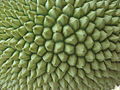 Jackfruit-outiside view.jpg
