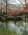 Japanese Gardens Red Buds (5569627824).jpg