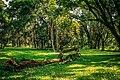 Jardim Botânico de SP - Floresta.jpg