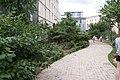 Jardin de Vitaly juin 2020 5.jpg