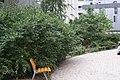 Jardin de Vitaly juin 2020 8.jpg