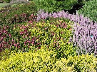 Jardins de Callunes - Ericaceae in flower