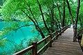 Jiuzhaigou, Aba, Sichuan, China - panoramio (21).jpg