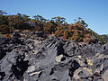 Jogasaki Coast 20111016 c.jpg