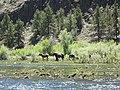 John Day River, horses.JPG