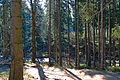 Karkonoski Park Narodowy – Kamieńczyk 04.jpg