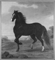 Karl XI:s livhäst Pegasus