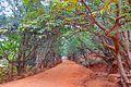 Kasturba Rd, Matheran, Maharashtra 410102, India - panoramio (13).jpg