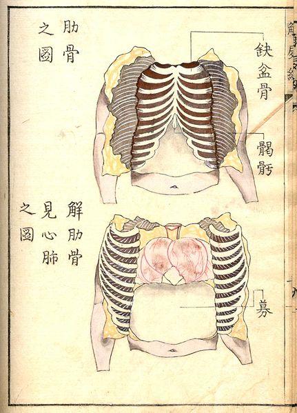 Kaishi Hen An 18th Century Japanese Anatomical Atlas The Public