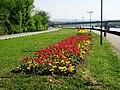Kej pored Dunava, Petrovaradin.JPG