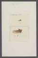 Kend - Print - Iconographia Zoologica - Special Collections University of Amsterdam - UBAINV0274 042 04 0024.tif